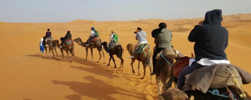 cameltrips.jpg